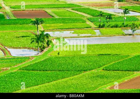 Taro fields in Hanalei Valley Island of Kauai Hawaii - Stock Photo