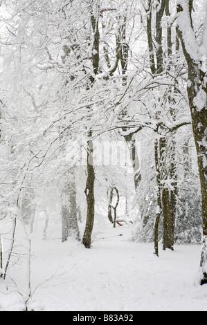 Heavy snow creates a winter wonderland, London - Stock Photo