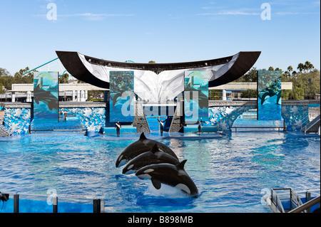 Orca whale in pool sea world orlando florida united for Pool show orlando florida