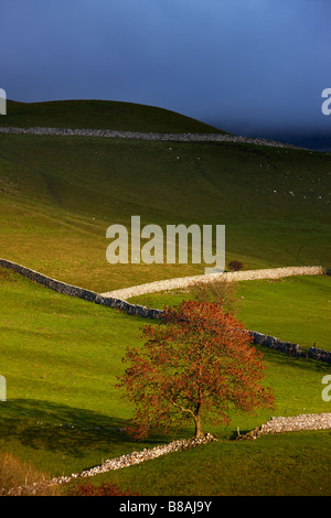 stone walls and barns nr Kettlewell, Wharfedale, Yorkshire Dales National Park, England, UK - Stock Photo