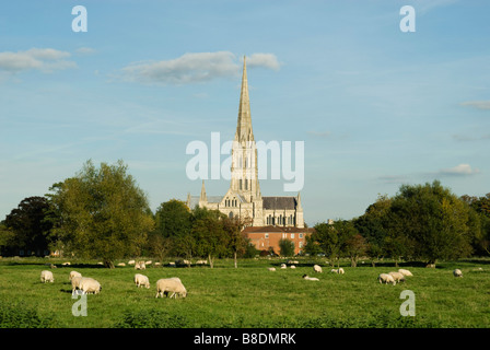 Salisbury cathedral - Stock Photo