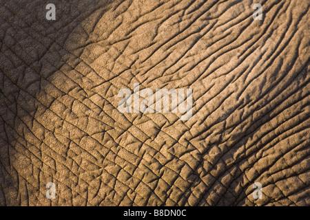 Skin of african elephant - Stock Photo