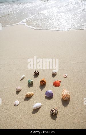 Shells on a beach. - Stock Photo