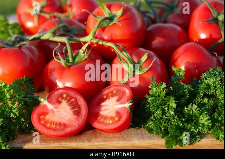 Home grown ripe organic tomatoes - Stock Photo