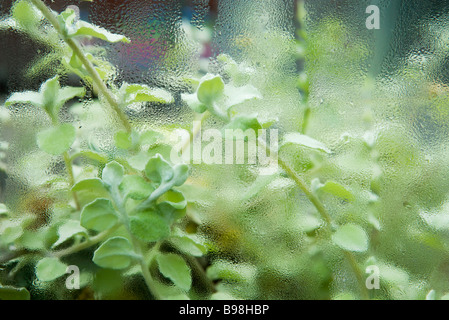 Succulent plant growing in humid terrarium - Stock Photo