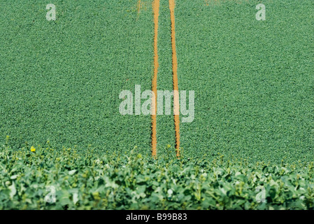 Tire tracks in cultivated field, high angle view - Stock Photo