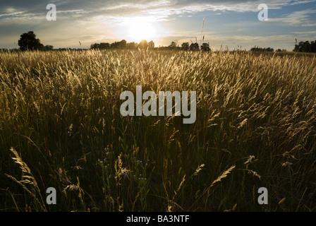 Sun setting over the wild grasses aRGB - Stock Photo