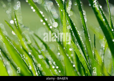 Grass and droplets - Stock Photo
