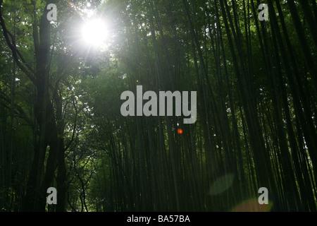 Bamboo forest in Arashiyama Kyoto Kansai Japan - Stockfoto