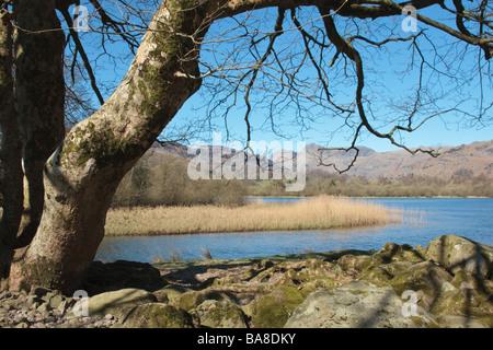 View across Elter Water towards the Langdale Pikes, Great Langdale, Cumbria, UK.  Taken in April - Stockfoto