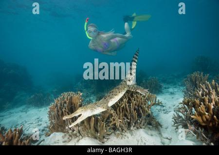 Skin Diver meets Saltwater Crocodile Crocodylus porosus Micronesia Palau - Stock Photo