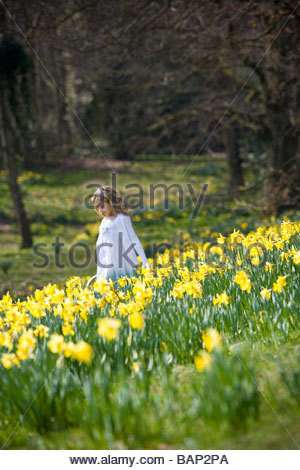 A young girl walking amongst daffodils in spring time - Stock Photo