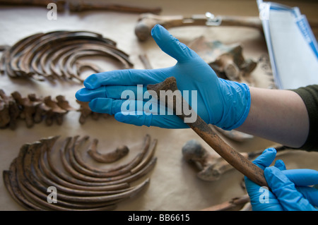 how to become a forensic archaeologist