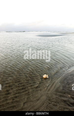 sea shell on shoreline - Stock Photo