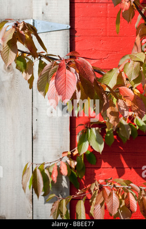 Autumn leaves garage wall and door - Stock Photo