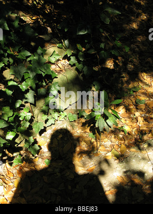man's shadow in woods - Stock Photo