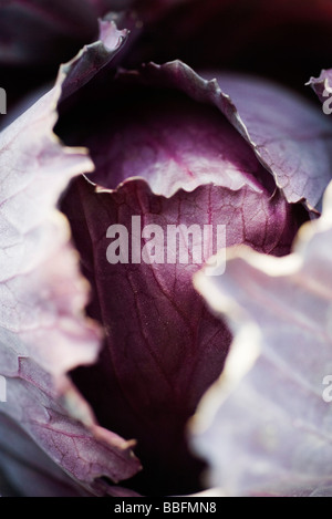 Red cabbage, extreme close-up - Stock Photo