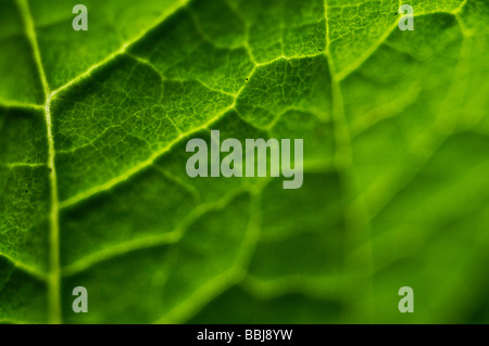Macro leaf - Stock Photo