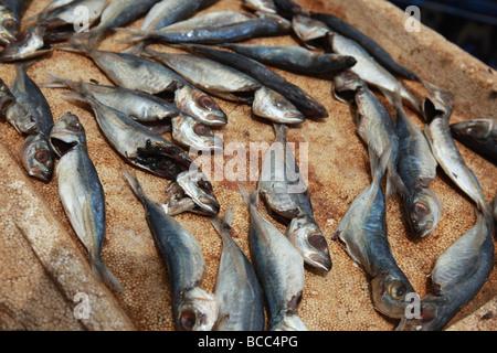 Fish on sale in Connemara Market, Trivandrum, Kerala, India - Stock Photo
