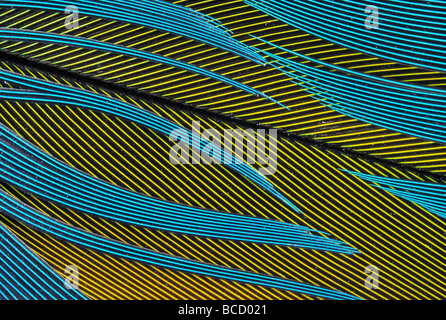 PARROT FEATHERS yellow and blue. close detail - Stock Photo
