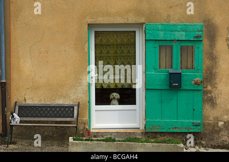 A white Poodle dog looks out from a front door window. Sault, Provence, France - Stock Photo