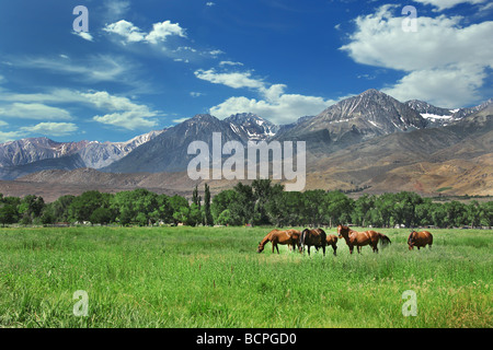 Horses Living in the Eastern Sierra Nevada Mountains - Stock Photo