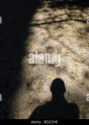 man's shadow on footpath in woods - Stock Photo