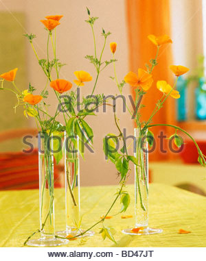 Californian poppies and Boston ivy in glass vases - Stock Photo