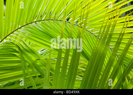 Palm frond details ideal for a jungle background - Stockfoto