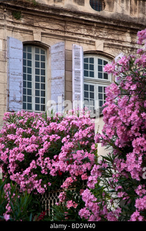 Purply pink flowers in front of a home with blue shutters in St. Remy de-Provence France - Stock Photo
