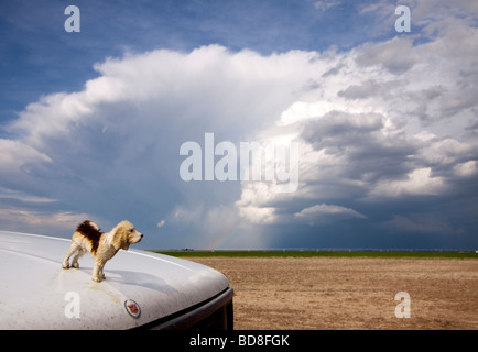 The hood ornament of the Doppler on Wheels Rapidscan truck is parked in front of a thunderstorm in the distance - Stock Photo