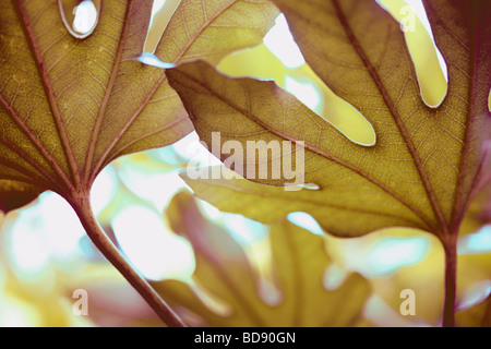beautiful leaf in a contemporary style fine art photography Jane Ann Butler Photography JABP533 - Stockfoto