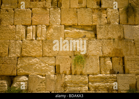 Closeup detail of the wailing wall in Jeruslaem - Stock Photo