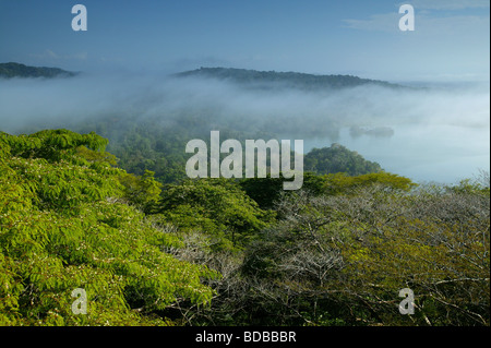Early morning mist in Soberania national park, Republic of Panama. - Stock Photo