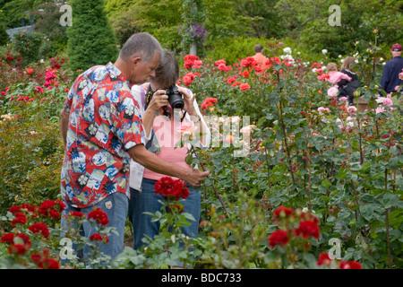 Portland Rose Garden , Portland Oregon, USA Stock Photo: 97394070 ...