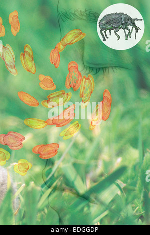 ALLERGY, DRAWING - Stock Photo