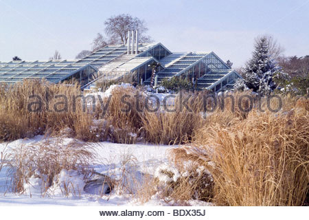 The Grass Garden with the Princess of Wales Conservatory in background. RBG Kew in winter - Stock Photo