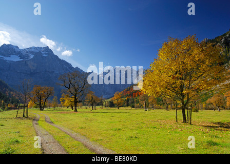 Track between maple trees in autumn colours with view to Spritzkarspitze, Grosser Ahornboden, Karwendel, Tyrol, - Stock Photo