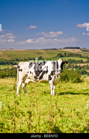 holstein black singles The holstein (aka american holstein, canadian holstein) saga begins in massachusetts in 1852 when winthrop w chenery bought a single black pied 'holland' cow off a dutch ship.