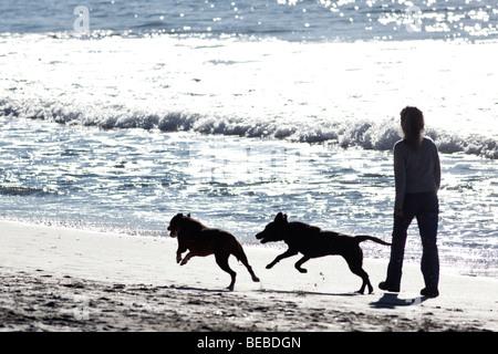 Dog walking on a beach on Waiheke Island (New Zealand) - Stock Photo