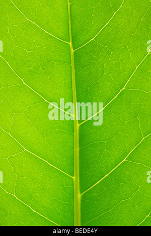 Structure of a leaf - Stock Photo