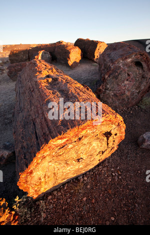 Petrified Logs, Petrified Forest National Park, Arizona - Stock Photo