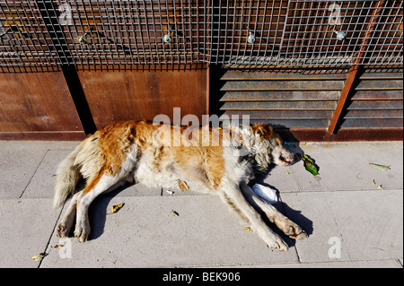 Stray dog sleeping among litter in a city street - Stock Photo