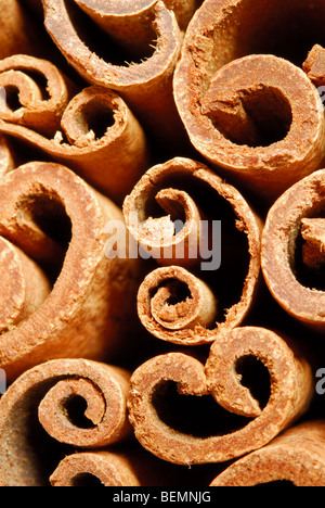 Cinnamon quills. Cinnamomum zeylanicum. - Stock Photo