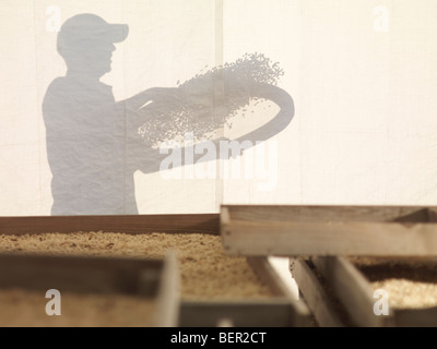 Silhouette Of Man With Coffee Beans - Stock Photo