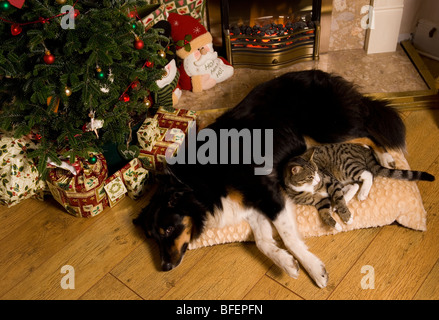 A Dog Sleeping By The Fireplace Stock Photo Royalty Free