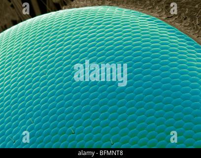 Wasp eye, SEM - Stock Photo