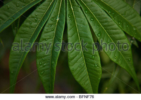 A close view of dew on leaves at Mockingbird Hill. - Stock Photo