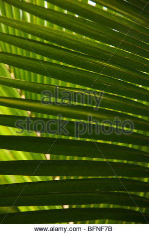 A close view of palms at Mockingbird Hill. - Stock Photo