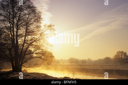 Tranquil scene with Oak tree at sunrise and mist on River Wey after overnight frost in early spring. Elstead Surrey - Stock Photo